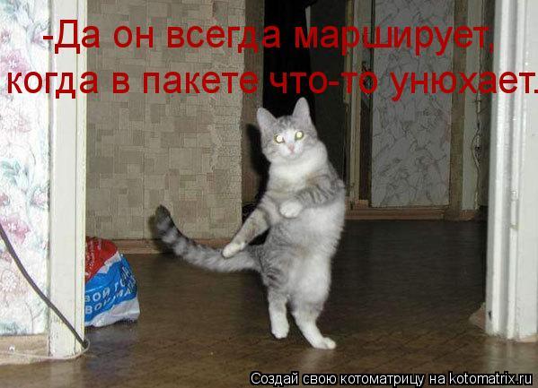 Котоматрица: -Да он всегда марширует, когда в пакете что-то унюхает.