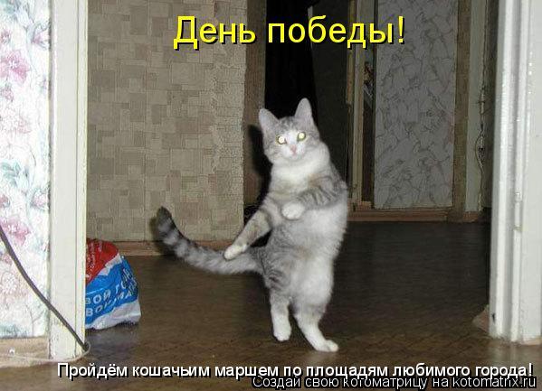 Котоматрица: День победы!  Пройдём кошачьим маршем по площадям любимого города!