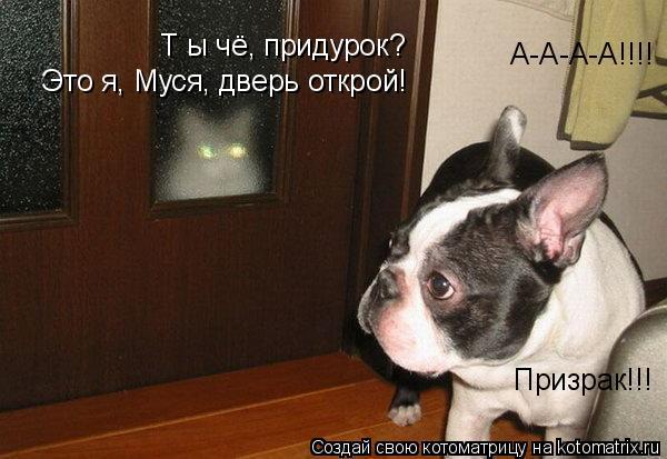 Котоматрица: А-А-А-А!!!! Призрак!!! Т ы чё, придурок?  Это я, Муся, дверь открой!