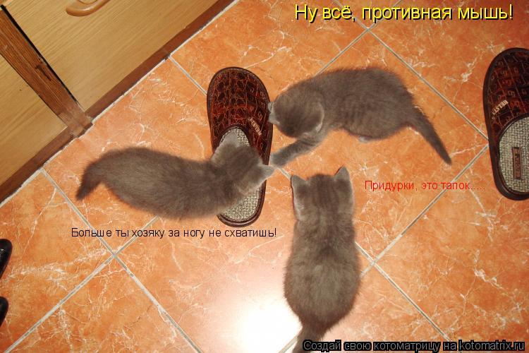 Котоматрица: Ну всё, противная мышь!  Больше ты хозяку за ногу не схватишь! Придурки, это тапок.....