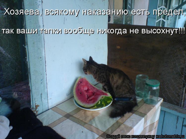 Котоматрица: Хозяева, всякому наказанию есть предел, так ваши тапки вообще никогда не высохнут!!!