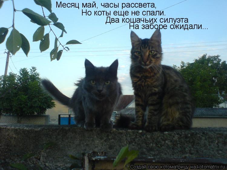 Котоматрица: Месяц май, часы рассвета, Но коты еще не спали. Два кошачьих силуэта На заборе ожидали...