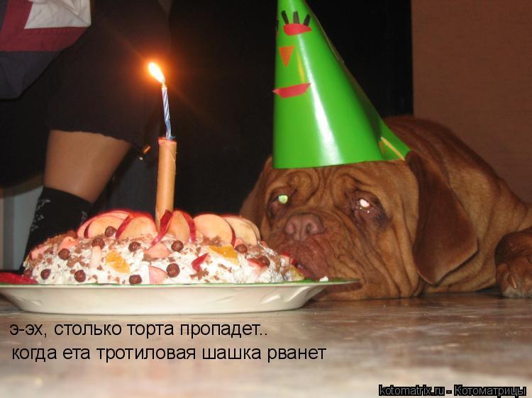 Котоматрица: когда ета тротиловая шашка рванет э-эх, столько торта пропадет..