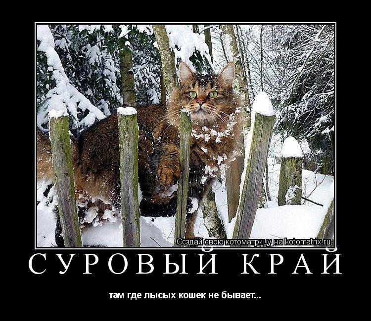 Котоматрица: СУРОВЫЙ КРАЙ там где лысых кошек не бывает...