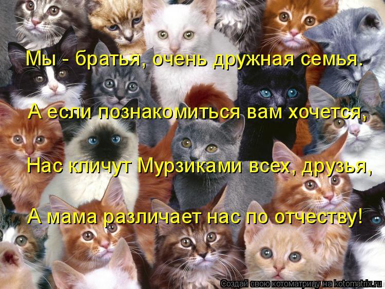 Котоматрица: Мы - братья, очень дружная семья. А если познакомиться вам хочется, Нас кличут Мурзиками всех, друзья, А мама различает нас по отчеству!
