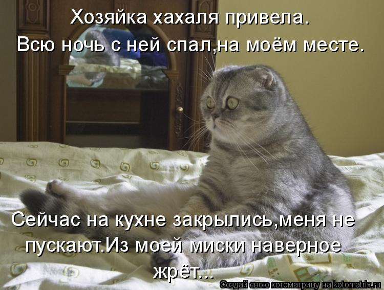 Котоматрица: Хозяйка хахаля привела. Всю ночь с ней спал,на моём месте. Сейчас на кухне закрылись,меня не   пускают.Из моей миски наверное жрёт...