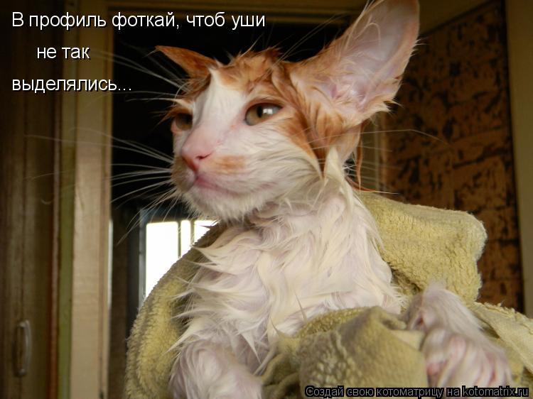 Котоматрица: В профиль фоткай, чтоб уши  не так выделялись...