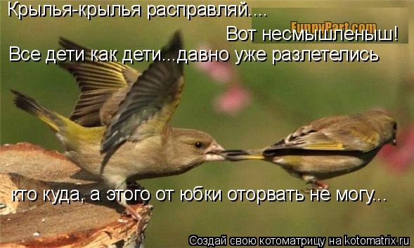 Котоматрица: Крылья-крылья расправляй....  Вот несмышленыш!  Все дети как дети…..давно уже разлетелись   кто куда, а этого от юбки оторвать не могу...