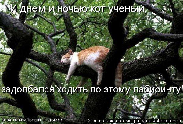 Котоматрица: И днем и ночью кот ученый,  задолбался ходить по этому лабиринту!