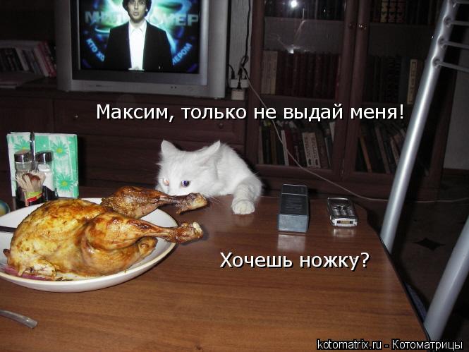 Котоматрица: Максим, только не выдай меня! Хочешь ножку?