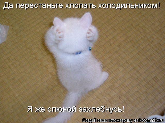 Котоматрица: Да перестаньте хлопать холодильником!  Я же слюной захлебнусь!