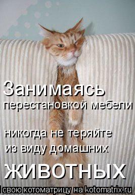 Котоматрица: перестановкой мебели никогда не теряйте из виду домашних животных Занимаясь