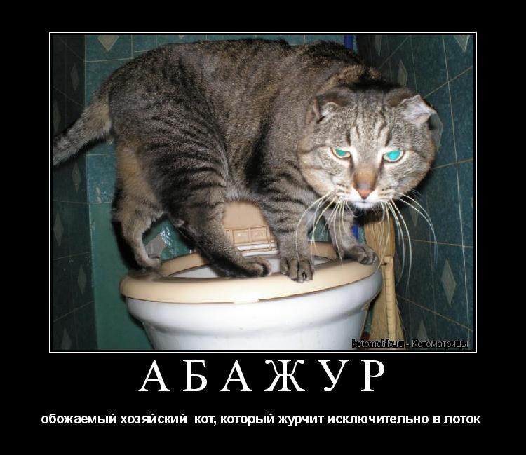 Котоматрица: АБАЖУР обожаемый хозяйский  кот, который журчит исключительно в лоток