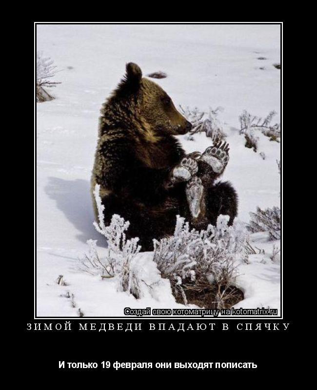 Котоматрица: Зимой медведи впадают в спячку И только 19 февраля они выходят пописать