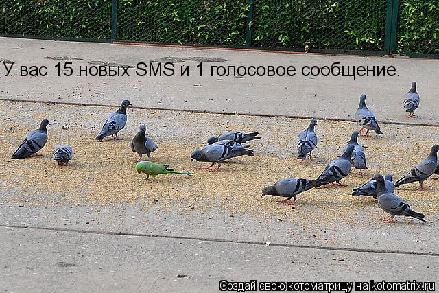Котоматрица: У вас 15 новых SMS и 1 голосовое сообщение.