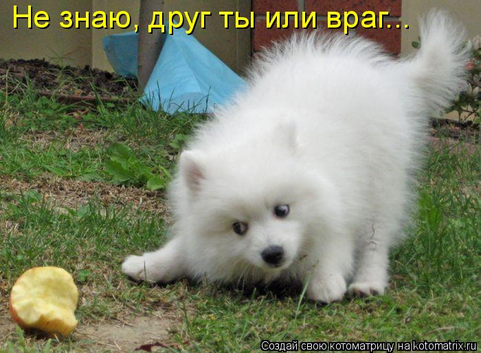 Котоматрица: Не знаю, друг ты или враг...