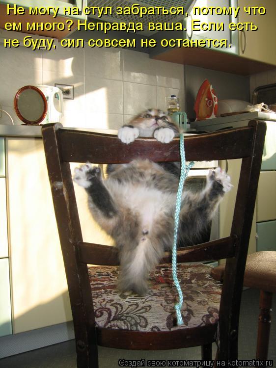 Котоматрица - Не могу на стул забраться, потому что ем много? Неправда ваша. Если ес