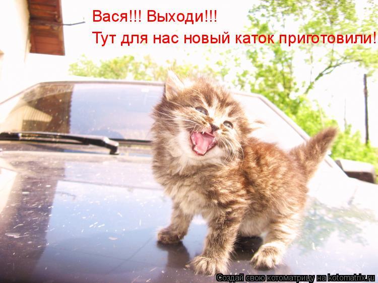 Котоматрица: Вася!!! Выходи!!! Тут для нас новый каток приготовили!