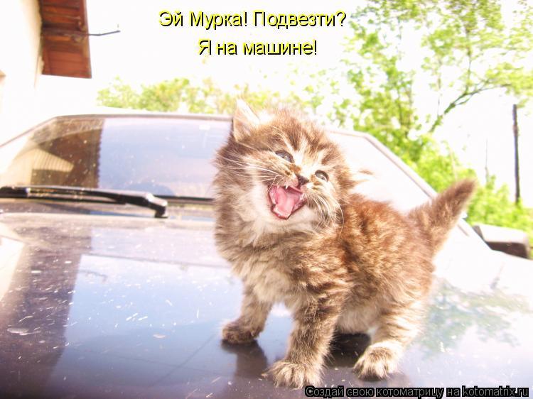 Котоматрица: Эй Мурка! Подвезти? Я на машине!