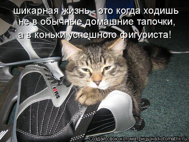 Котоматрица: шикарная жизнь - это когда ходишь не в обычные домашние тапочки, а в коньки успешного фигуриста!