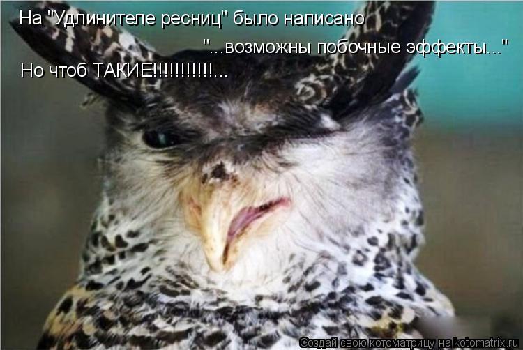 """Котоматрица: На """"Удлинителе ресниц"""" было написано """"...возможны побочные эффекты..."""" Но чтоб ТАКИЕ!!!!!!!!!!!..."""