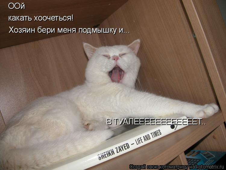 Котоматрица: ООй какать хоочеться! Хозяин бери меня подмышку и... В ТУАЛЕЕЕЕЕЕЕЕЕЕЕЕТ..