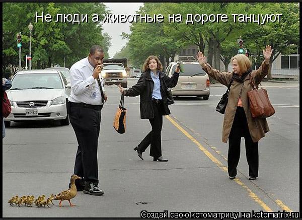 Котоматрица: Не люди а животные на дороге танцуют
