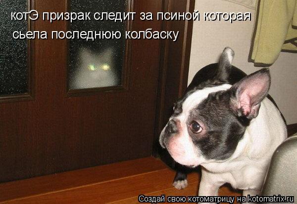 Котоматрица: котЭ призрак следит за псиной которая сьела последнюю колбаску