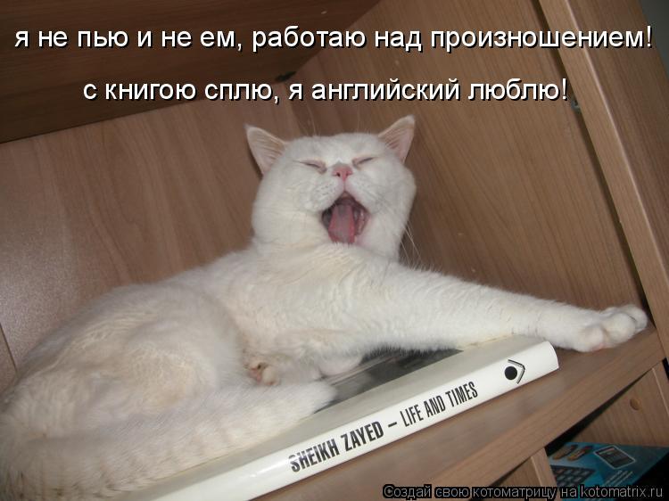 Котоматрица: я не пью и не ем, работаю над произношением! с книгою сплю, я английский люблю!