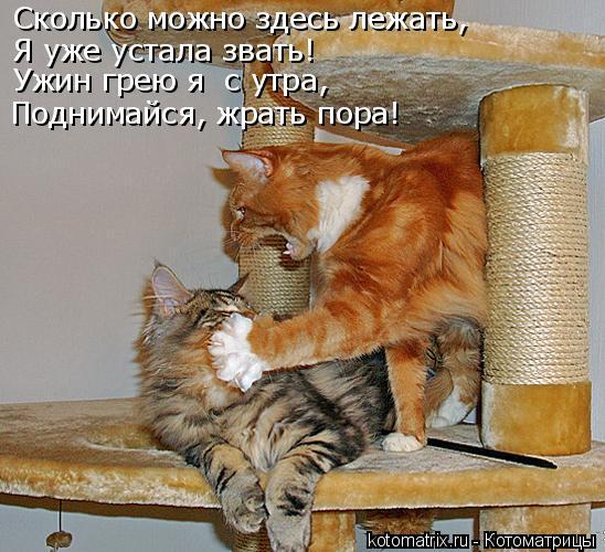 Котоматрица: Сколько можно здесь лежать, Я уже устала звать! Ужин грею я  с утра, Поднимайся, жрать пора!