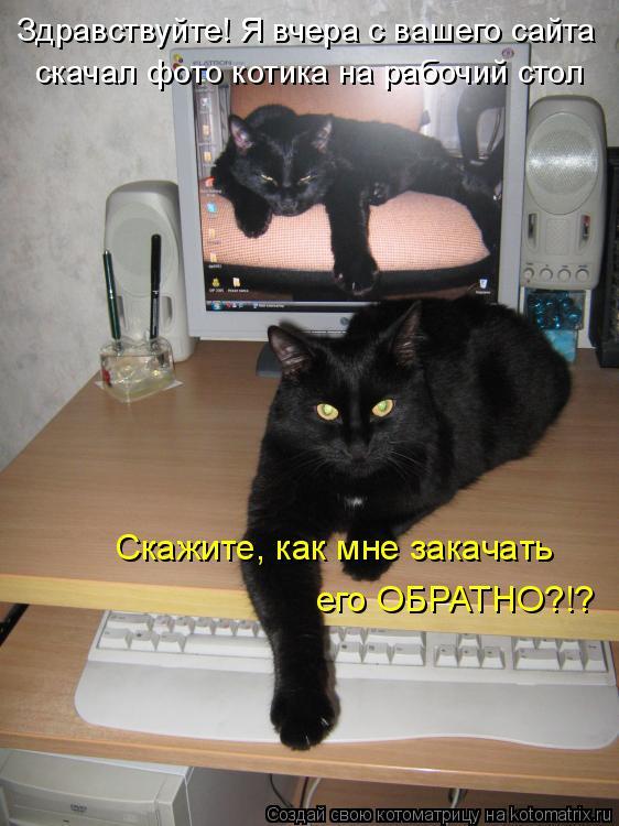 Котоматрица: Здравствуйте! Здравствуйте! Я вчера с вашего сайта скачал фото котика на рабочий стол Скажите, как мне закачать его ОБРАТНО?!?