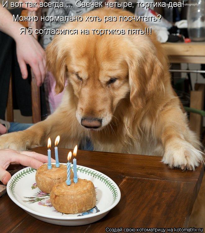 Котоматрица: Можно нормально хоть раз посчитать? И вот так всегда.... Свечек четыре, тортика два! Я б согласился на тортиков пять!!!