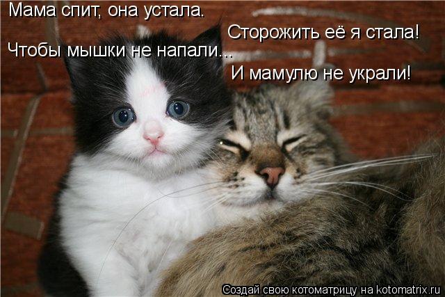 Котоматрица: Сторожить её я стала! Мама спит, она устала. Чтобы мышки не напали... И мамулю не украли!