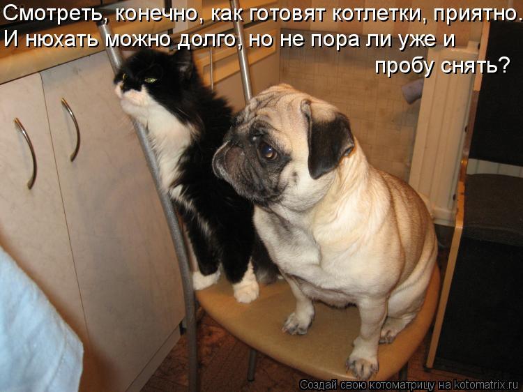Котоматрица - Смотреть, конечно, как готовят котлетки, приятно. И нюхать можно долго