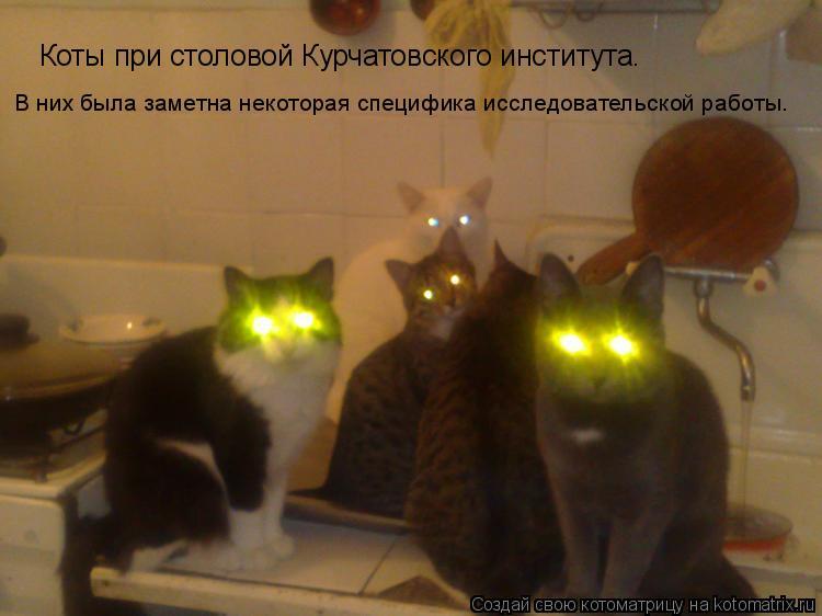 Котоматрица: Коты при столовой Курчатовского института. В них была заметна некоторая специфика исследовательской работы.