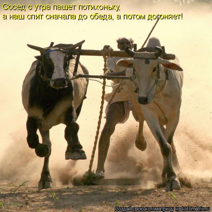 http://kotomatrix.ru/images/lolz/2010/05/18/576791.jpg