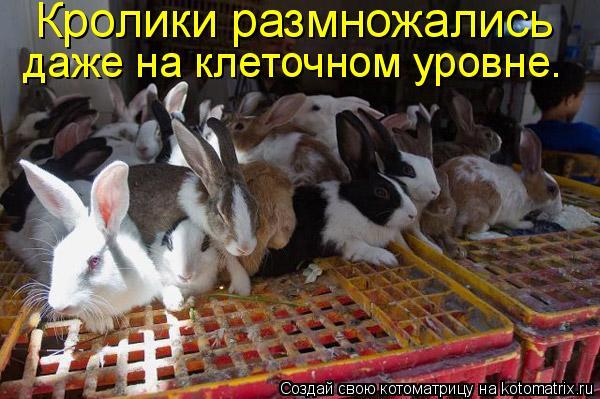 Котоматрица: Кролики размножались  даже на клеточном уровне.