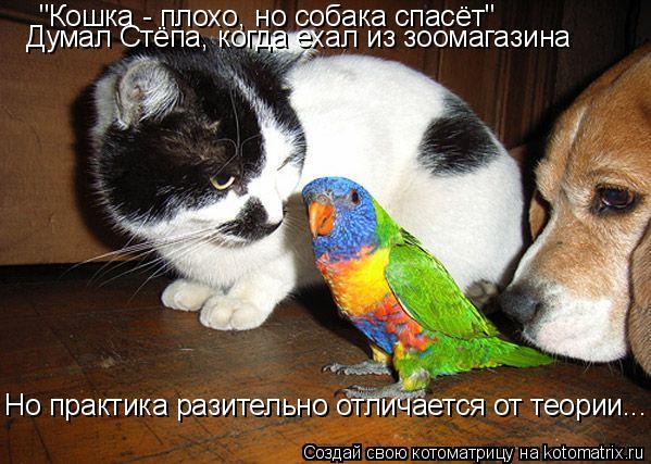 "Котоматрица: ""Кошка - плохо, но собака спасёт"" Думал Стёпа, когда ехал из зоомагазина Но практика разительно отличается от теории..."