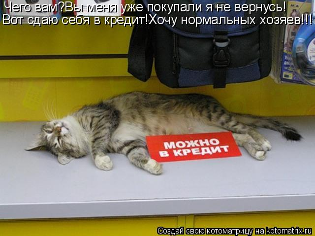Котоматрица: Чего вам?Вы меня уже покупали я не вернусь! Вот сдаю себя в кредит!Хочу нормальных хозяев!!!