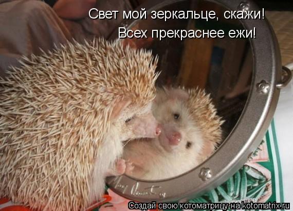 Котоматрица: Свет мой зеркальце, скажи! Всех прекраснее ежи!