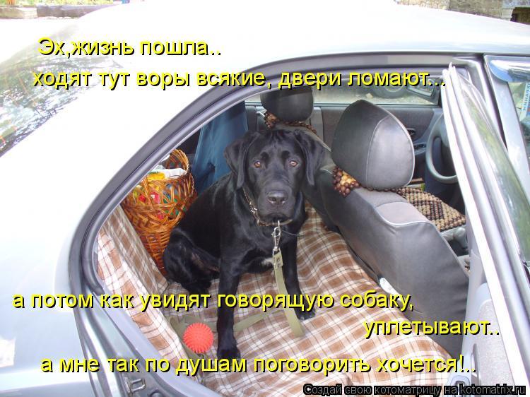 Котоматрица: Эх,жизнь пошла.. ходят тут воры всякие, двери ломают... а потом как увидят говорящую собаку, уплетывают.. а мне так по душам поговорить хочется