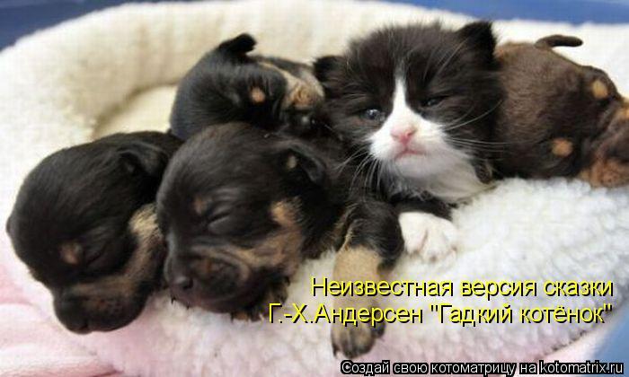 """Котоматрица: Неизвестная версия сказки Г.-Х.Андерсен """"Гадкий котёнок"""""""