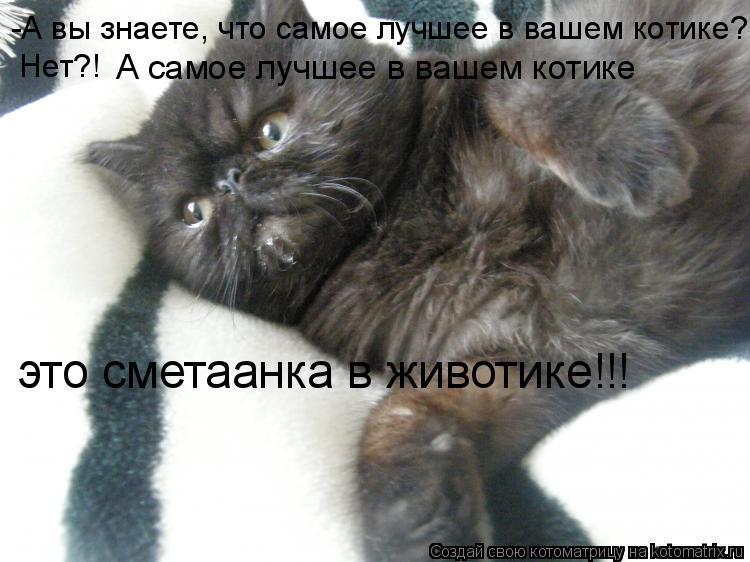 Котоматрица: -А вы знаете, что самое лучшее в вашем котике? Нет?! А самое лучшее в вашем котике это сметаанка в животике!!!
