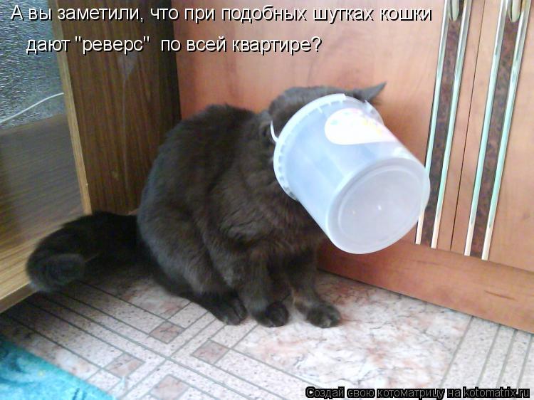 """Котоматрица: А вы заметили, что при подобных шутках кошки дают """"реверс""""  по всей квартире?"""