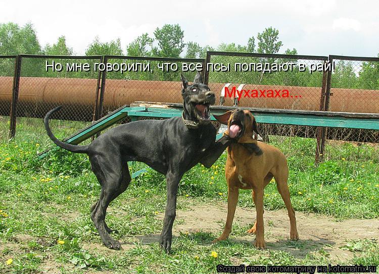 Котоматрица: Но мне говорили, что все псы попадают в рай! Мухахаха...