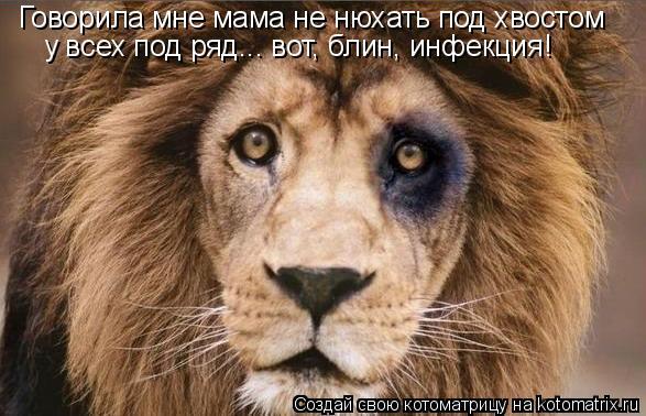 Котоматрица: Говорила мне мама не нюхать под хвостом у всех под ряд... вот, блин, инфекция!