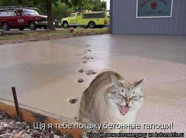 Котоматрица: Щя я тебе покажу бетонные галоши!