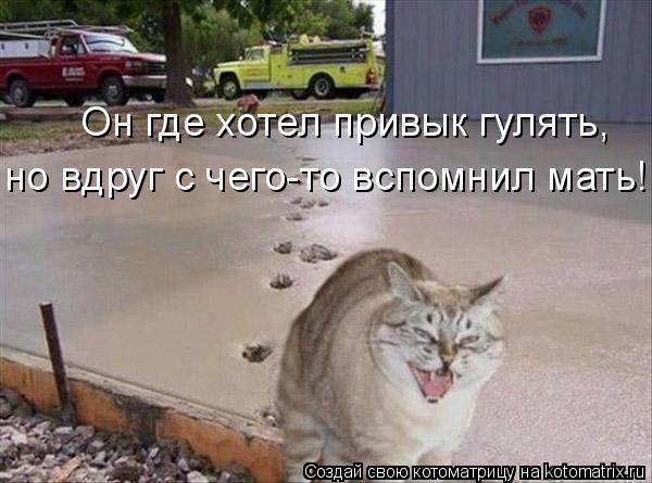Котоматрица: Он где хотел привык гулять, но вдруг с чего-то вспомнил мать!