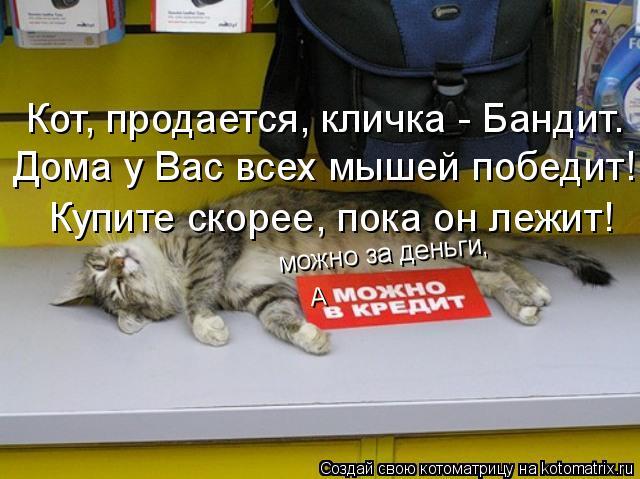 Котоматрица: можно за деньги, А Кот, продается, кличка - Бандит. Дома у Вас всех мышей победит! Купите скорее, пока он лежит!