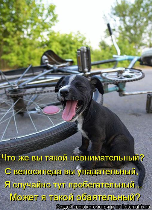 Котоматрица: Что же вы такой невнимательный?  С велосипеда вы упадательный, Я случайно тут пробегательный... Может я такой обаятельный?